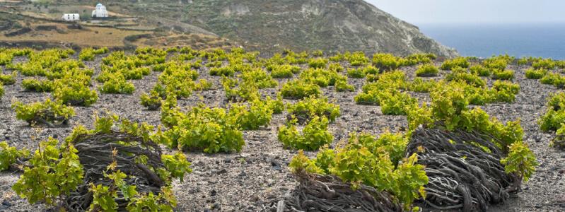 SANTORINI-FAMOUS-WINES